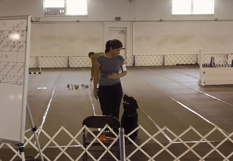 Screenshot of the Mason's Obedience Trial video that captures a trainer looking down on a black lab she's working with