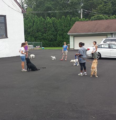Group of dog owners with their pets engaged in a training session