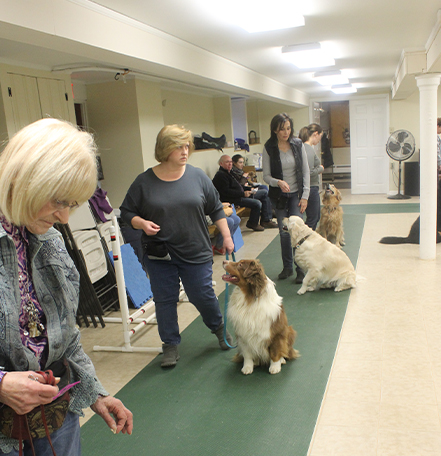 Group pet training class in session, owners giving commands to their dogs