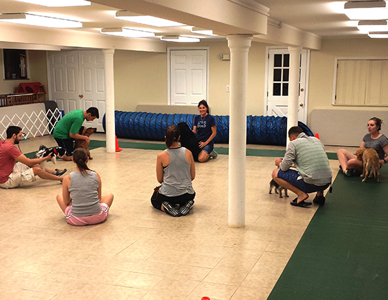 Group of pet owners sitting on the floor with their dogs, listening to the trainer's instructions